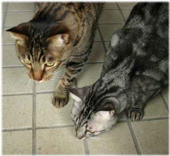 工房の猫1