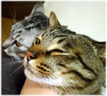 工房の猫2