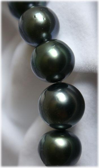 黒蝶真珠2
